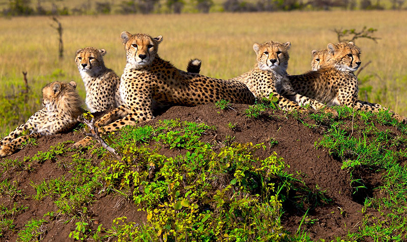 best safari in south africa reviews